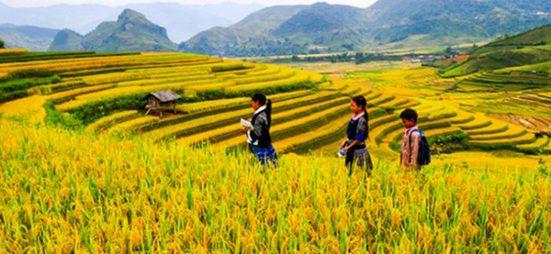 lap-dan-y-bai-van-ta-canh-dong-lua-chin-600-1140x526_c